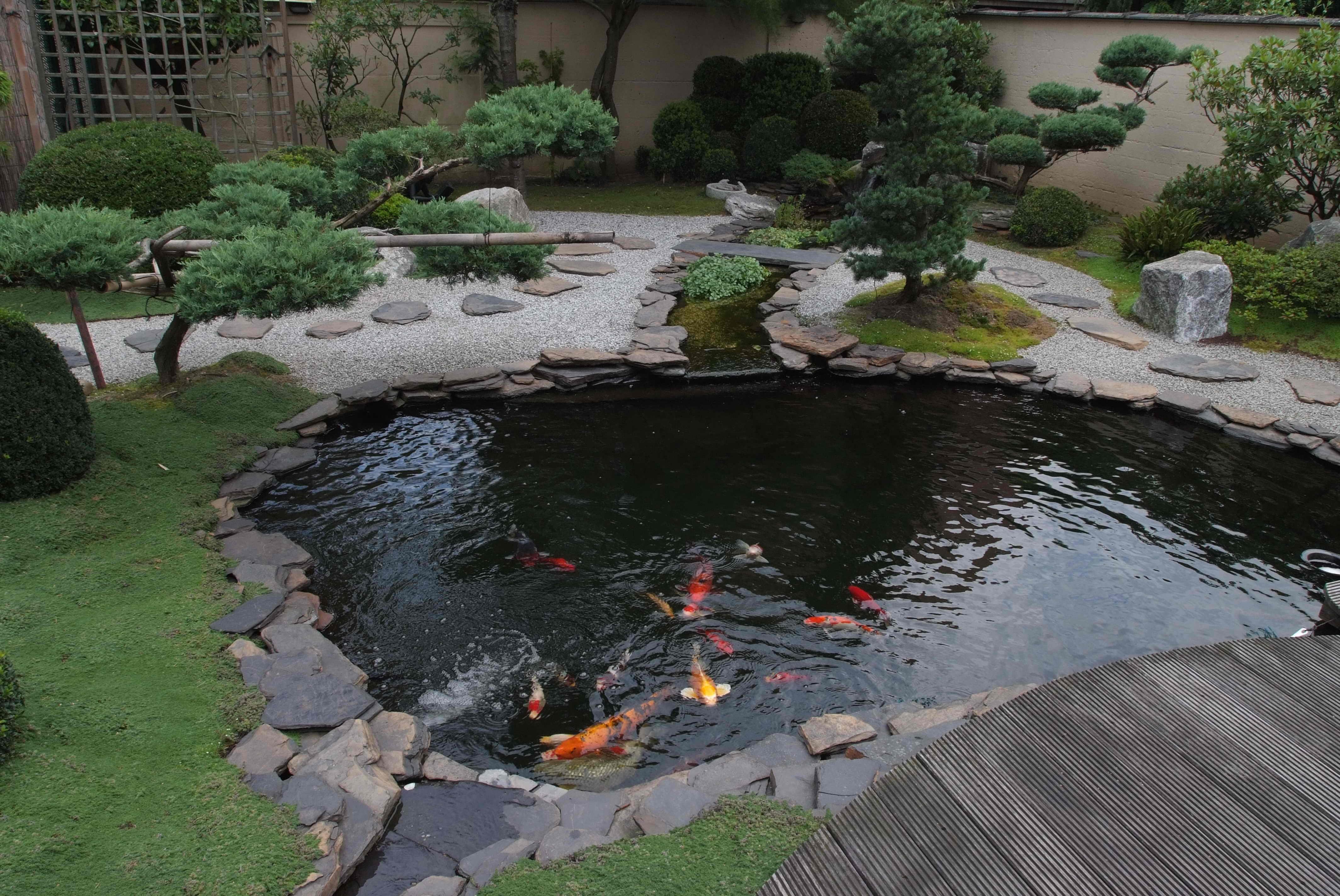 Fish-Pond-3.jpg