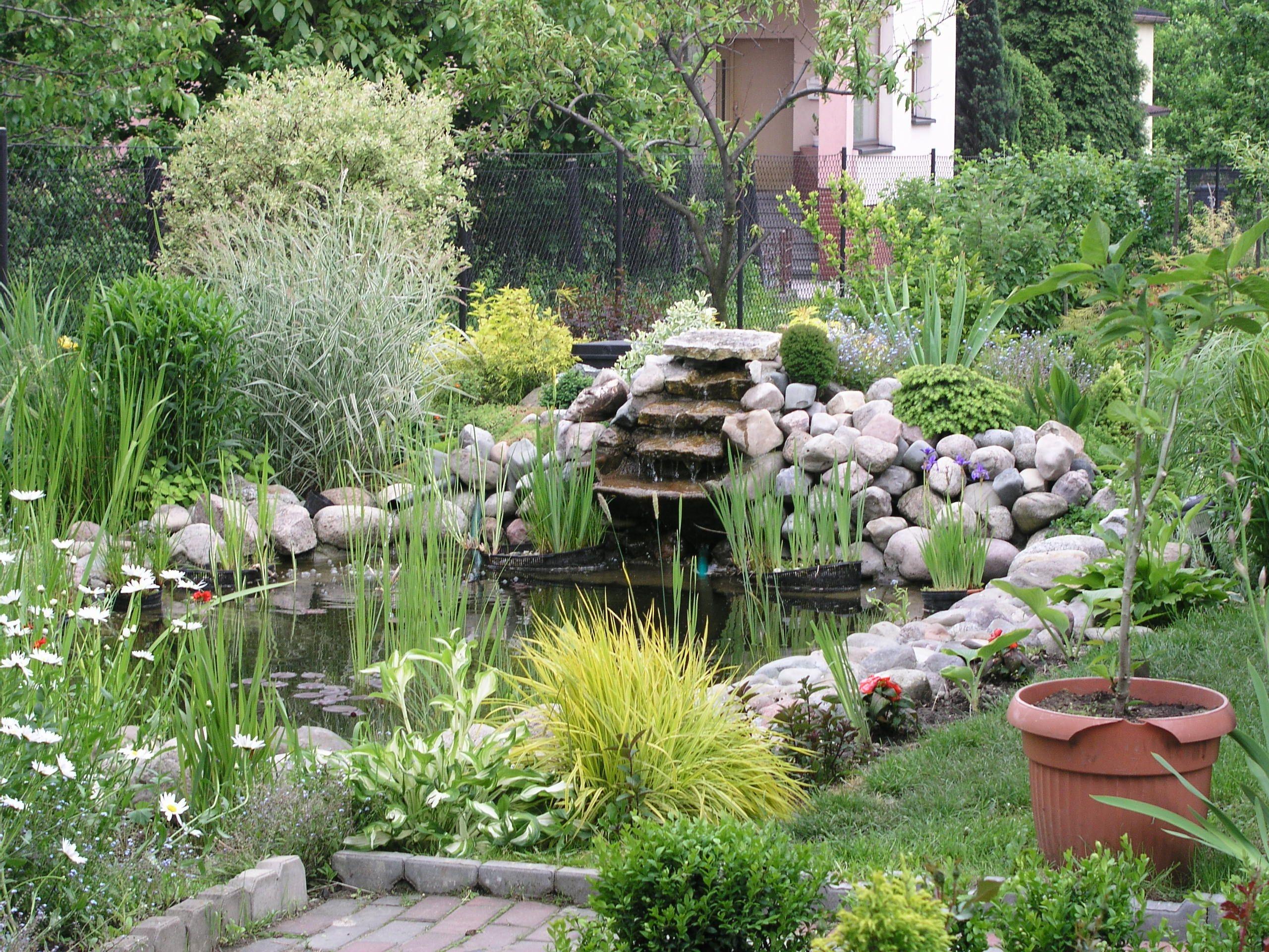Garden_pond_3.jpg